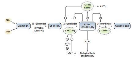 mutation CyP24A1